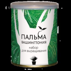palma-vashingtonia